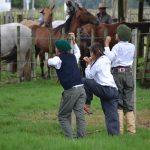 Criollas rurales