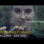 MARIPOSAS, AVES Y CABALLOS