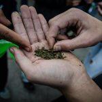 Legalización y legitimación de la marihuana: lo jurídico y lo moral