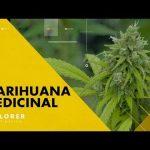 Marihuana Medicinal – National Geographic Latinoamérica